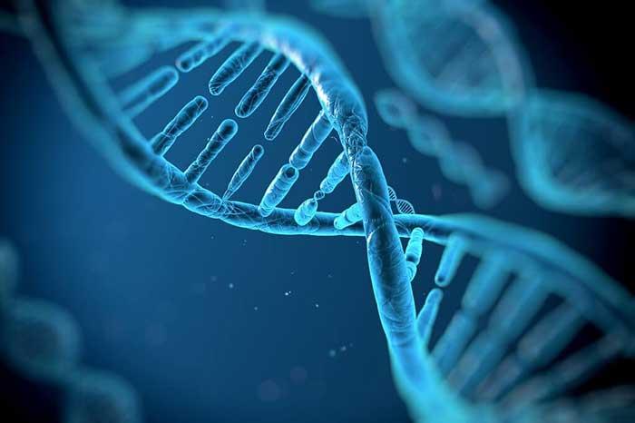 هدایت تمایز سلول های بنیادی به کمک چاپگرهای سه بعدی