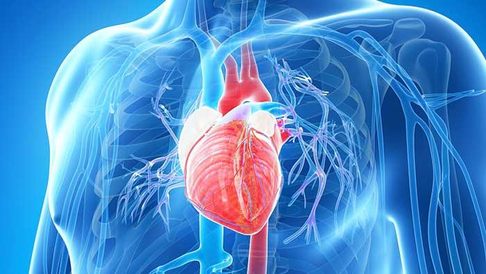 استفاده از سلول های بنیادی مشتق از جفت برای درمان مشکلات قلبی