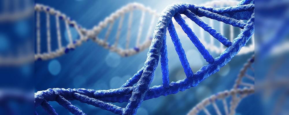 کشف جهش ژنی نادری که از چاقی بیش از حد جلوگیری میکند