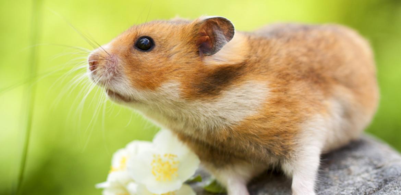 چگونه نوزاد پستانداران در مورد دنیای پیرامون خود رویاپردازی می کنند؟