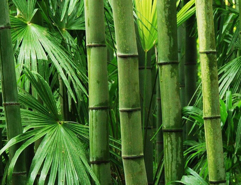 ابداع باتریهای کارآمد با الهام از گیاه بامبو!