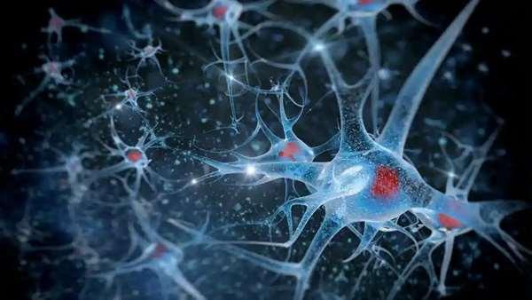ژنی که از آسیب سلول های بنیادی مغز بر اثر استرس محافظت می کند