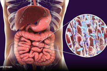 کشف تاثیر میکروبیوم سیستم گوارش در کنترل پیری مغز