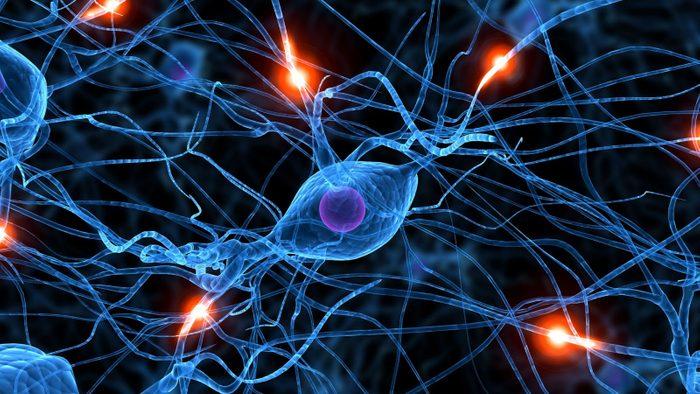 سلول درمانی موثر برای آسیب نخاعی در موش صحرایی،توسط فعال کننده پلاسمینوژن
