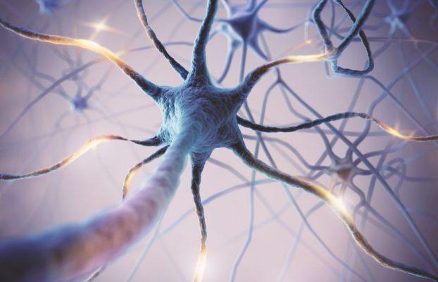 یافته محققان در زمینه حفاظت از سلول های عصبی
